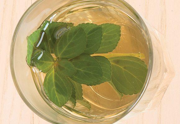 Chá de boldo para combater resfriados - NUTRIÇÃO - Viva Saúde