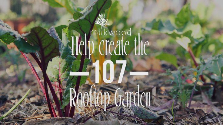 Help create the 107 Rooftop Garden