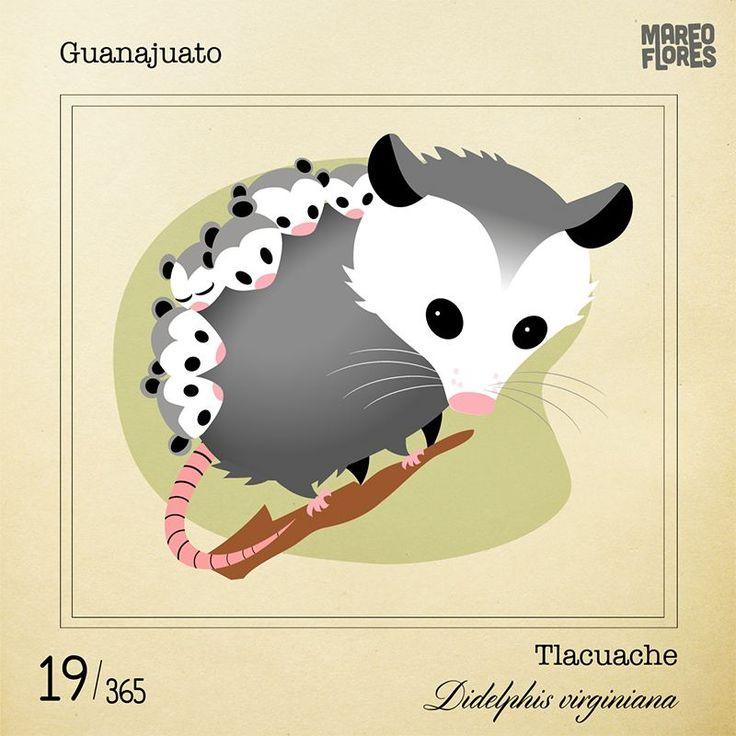 19-Guanajuato Tlacuache