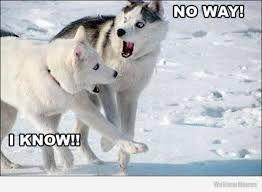 Image result for dog walking itself meme