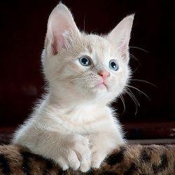 Choisir un nom de chat n'est pas aussi simple qu'il n'y paraît, surtout si on souhaite un prénom original. Concernant les noms de chiens, c'est plutôt simple : chaque année correspond à une lettre de l'alphabet. Si les chats ne ...