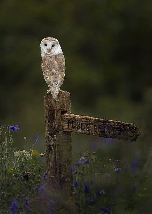 Photos, Nature, Beautiful, Baby Animal, Barns Owls, Birds, Hoot, Barn Owls, Feathers Friends