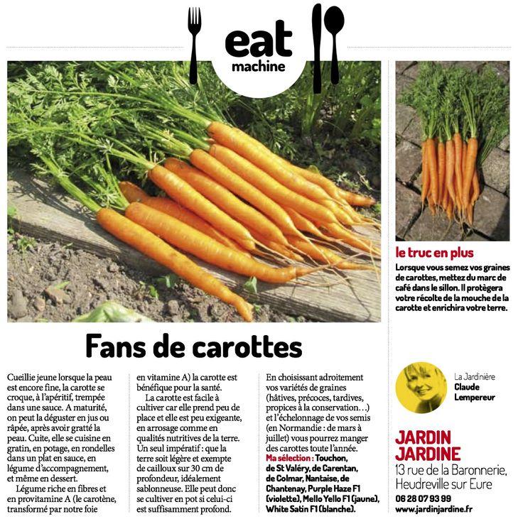 Une question sur la culture des carottes ? Je vous répondrai avec plaisir !