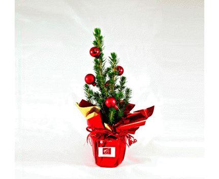 Sapin de Noël publicitaire en pot en image