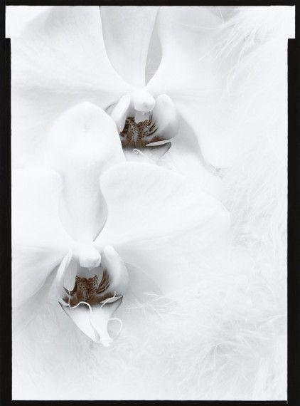 Olivia Parker Photography