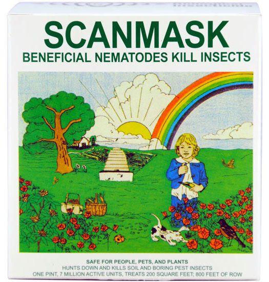 Beneficial nematodes vegetable garden gardens and plants for Beneficial nematodes for termites