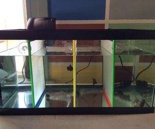 Fish tank dividers maybe could be used to house multiple for Cheap betta fish