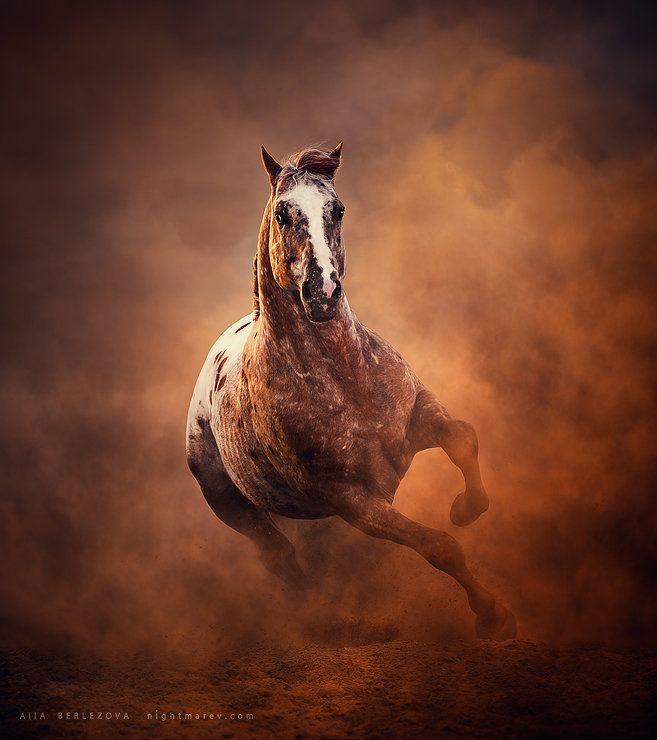 Appaloosa horse byAlla Berlezova
