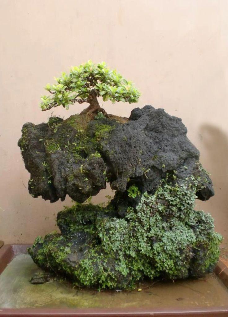 jp oak tree quercus on rock coolplants bonsai pinterest trees lava and rocks. Black Bedroom Furniture Sets. Home Design Ideas