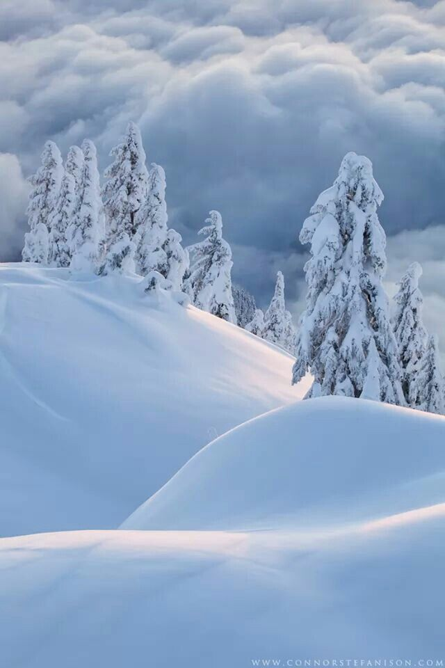 snowy hills and trees