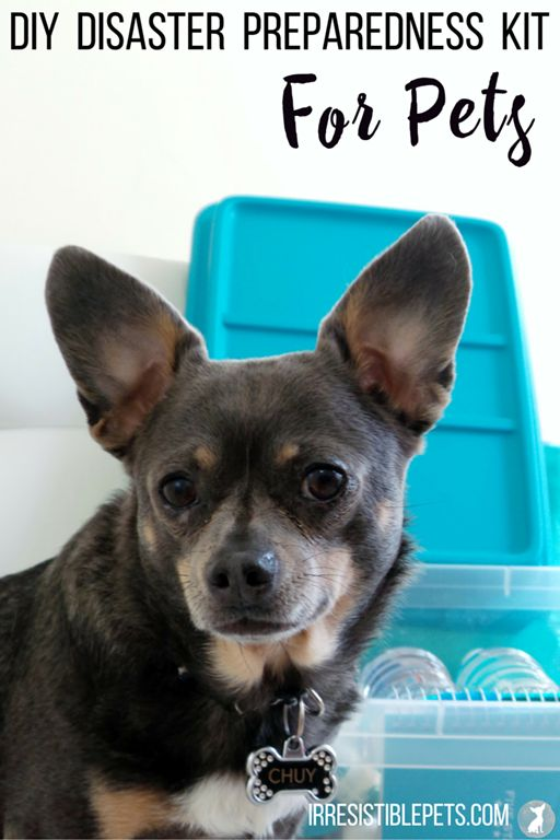 Get #PetPrepared with this DIY Disaster Preparedness Kit For Pets by IrresistiblePets.com #Sponsored