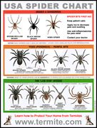 spider chart -pest control Lewiston, ID