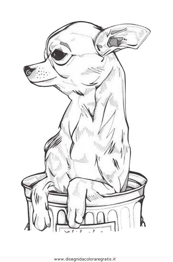 Раскраска собака чихуахуа