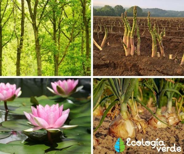 Tipos De Tallos Nombres Características Y Fotos Cuidado De Plantas Tipos De Plantas Tallo De La Planta