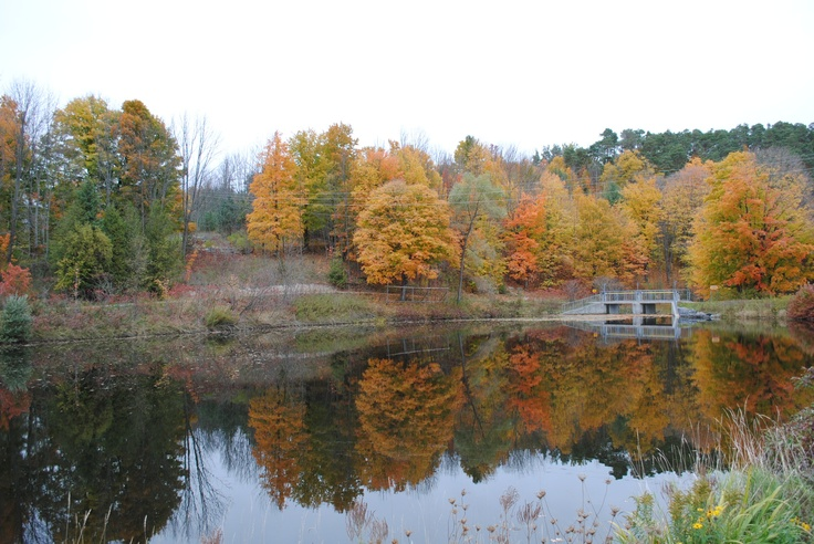 Fall colours in Warkworth, Ontario