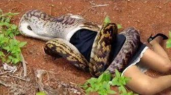 https://s-media-cache-ak0.pinimg.com/736x/fe/76/11/fe7611a18125d807ea7d47721d6372c3.jpg Green Anaconda Attacks On Humans