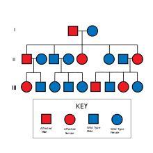 ley de Mendel: Principio de la uniformidad de los heterocigotos de la primera generación filial Establece que si se cruzan dos razas puras (un homocigoto dominante con uno recesivo) para un determinado carácter, los descendientes de la primera generación serán todos iguales entre sí, fenotípica y genotípicamente, e iguales fenotípicamente a uno de los progenitores (de genotipo dominante), independientemente de la dirección del cruzamiento. Expresado con letras mayúsculas las dominantes (A…