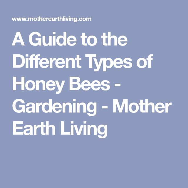 A Guide to the Different Types of Honey Bees - Gardening - Mother Earth Living