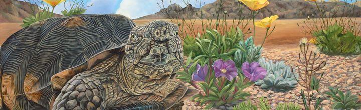 Tortuga del desierto - Laura's Wildlife Art Blog