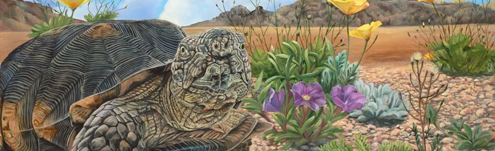 Tortuga del desierto - Laura's Wildlife Art Blog