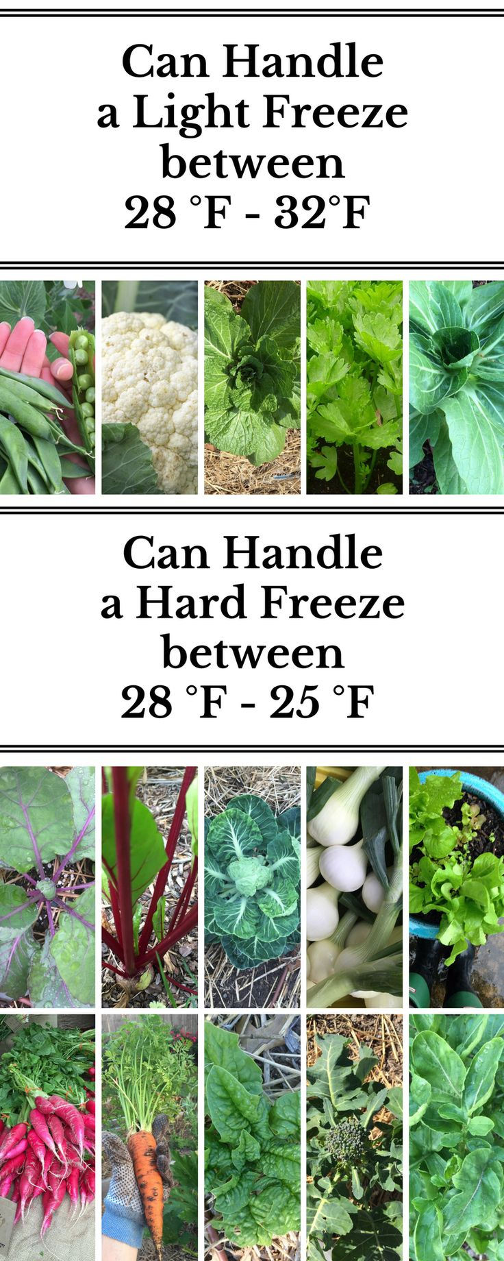 Before deciding on which plants to grow, you need to know which are warm season and cool season plants. Growing in the winter means you need to take it a step further and learn about frost tolerance in cool season crops. Here's an article that breaks it down, helping you decide what to grow when!