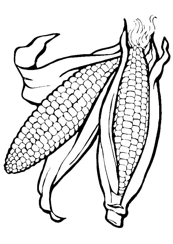 Corn Corn Ears Picture Coloring Page Ear Picture Coloring Pages Ears Of Corn