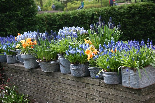 Growing Bulbs in Outdoor Containers | Garden Bulb Blog: Flower Bulbs & Gardening Tips