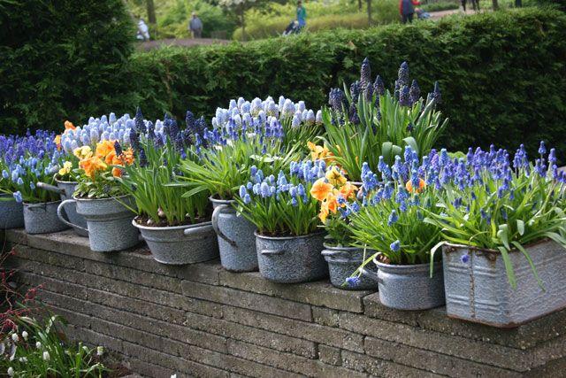Growing Bulbs in Outdoor Containers | Garden Bulb Blog: Flower Bulbs & Gardening Tips