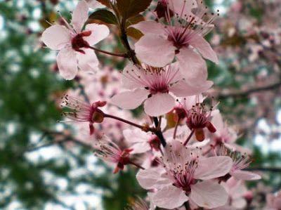 Ποικιλίες δέντρων και επικονιαστές