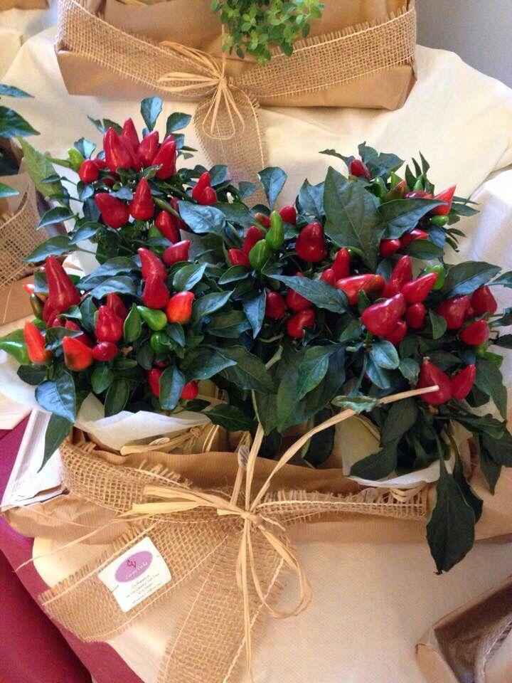 Centro tavola piante di peperoncino moulin pinterest for Pianta con la p