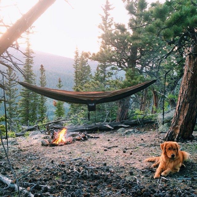 Camp with the pup and a hammock.