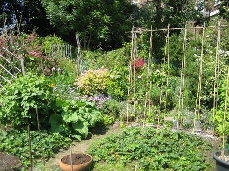 46 best Community Gardens images on Pinterest | Vegetable garden ...