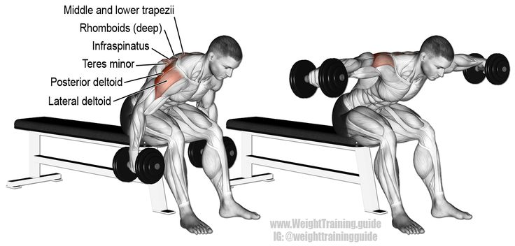 Seated bent over lateral raise. An isolation pull exercise. Muscles worked: Posterior Deltoid, Lateral Deltoid, Infraspinatus, Teres Minor, Rhomboids, and Middle and Lower Trapezii. Also known as seated rear delt raise.