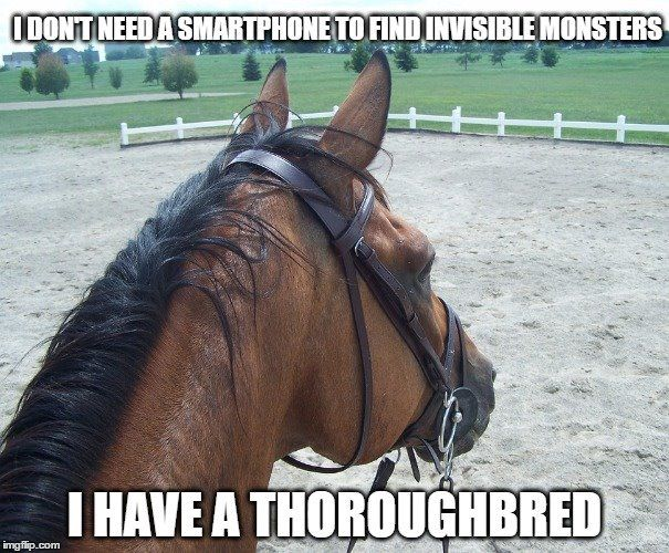 "Horse humor, ""I don't need a smartphone to find invisible monsters, I have a thoroughbred."" For real, thoroughbreds see monsters everywhere"