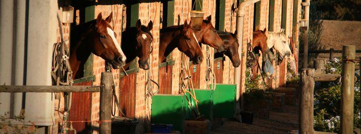 Horses at Alba Guest Farm