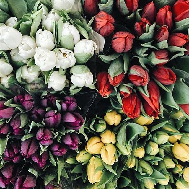 Directly from #Amsterdam #FlowerMarket a Good Morning to all our #women travelling around the world! Let the #internationalwomensday be every single day! We rock! 💪🏻🤘🏼🙌🏻 #iwd #iwd2017 by (pinktrotters). flowermarket #singel #prinsengracht #exploring #fiori #bestwish #women #travelgram #iwd #holland #morning #travelphoto #goodmorning #fotography #womensday #flowers #visitnl #iwd2017 #canals #travelpic #bestday #thenetherlands #flowerography #internationalwomensday #amsterdam #flowerday…