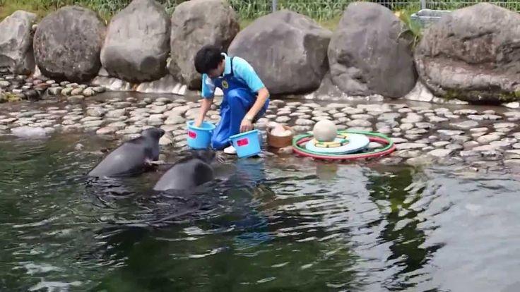 動物チャンネル 箱根園水族館のバイカルアザラシ