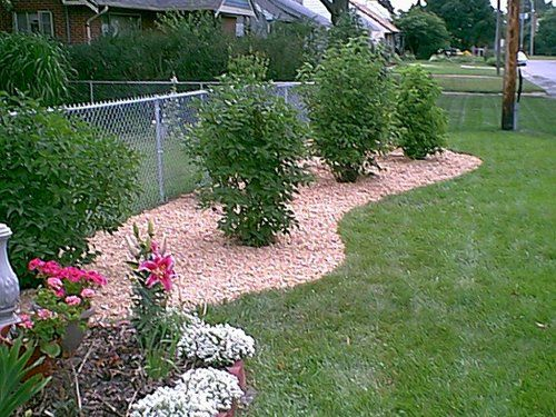 Landscape along chain link fence greenery pinterest for Garden along fence