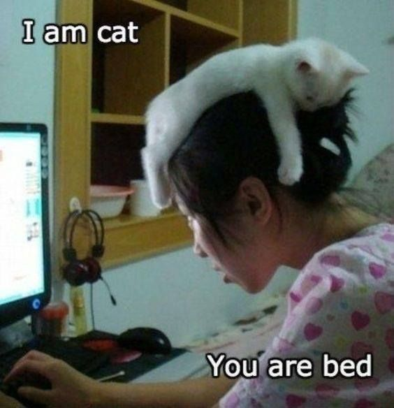 cat hat helps you achieve more... ?