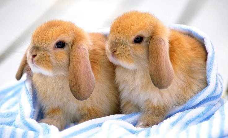 Hairy Rabbits 37