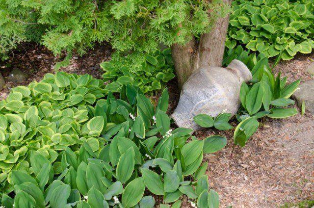 plantes-d'ombres-hostas-amphore-deco-exterieure