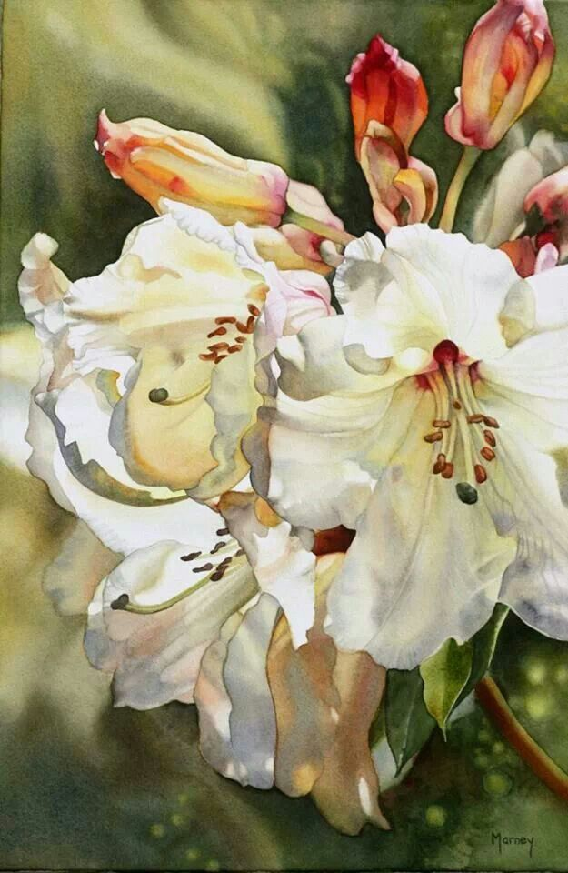 Watercolor flowers lilies white blooms