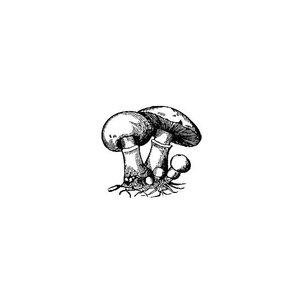 Mushroom Clipart ❤ liked on Polyvore featuring fillers, mushrooms, backgrounds and sketches