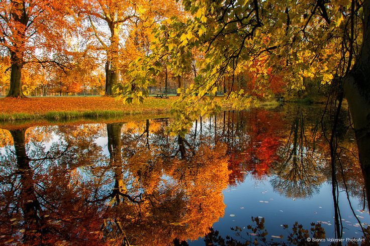 https://flic.kr/p/duhevg | Autumn reflections | colored autumn trees reflecting in the water