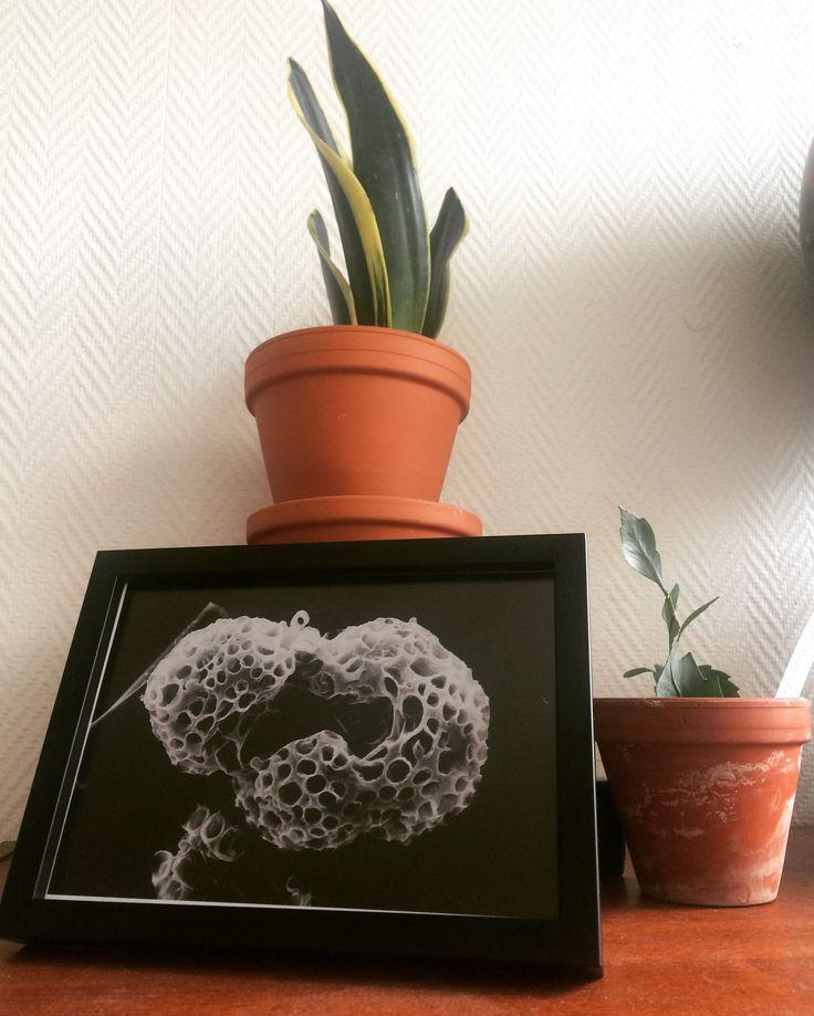 Algae | Summer | Sweden | Green plants | Clay pots | Cactus | Prints | Home decor | Interior design | White walls