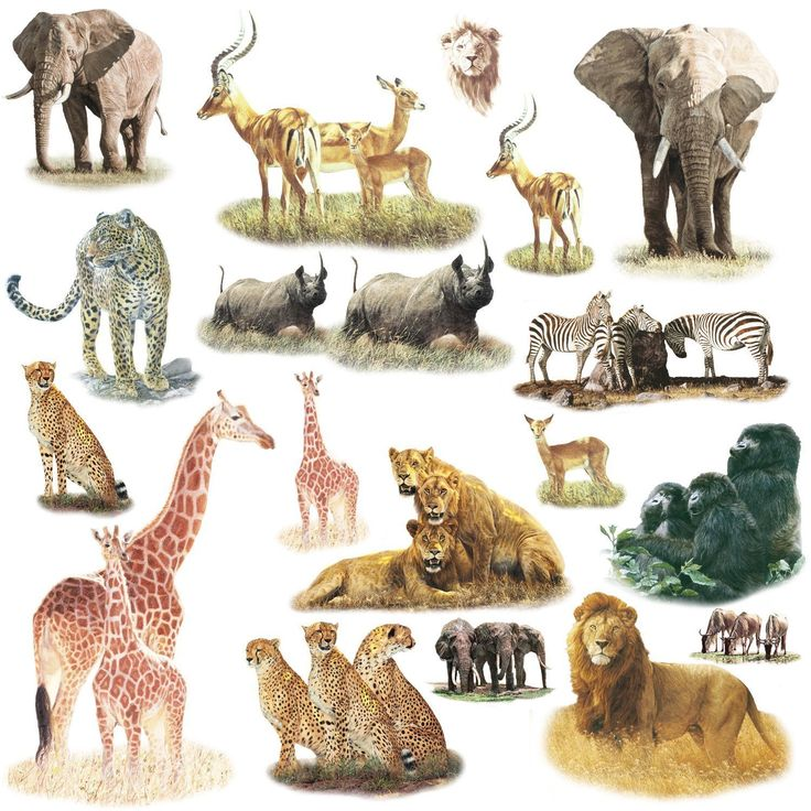 RoomMates Safari Peel U0026 Stick Wall Decals, 19 Count For Classroom Animal  Project? Part 84