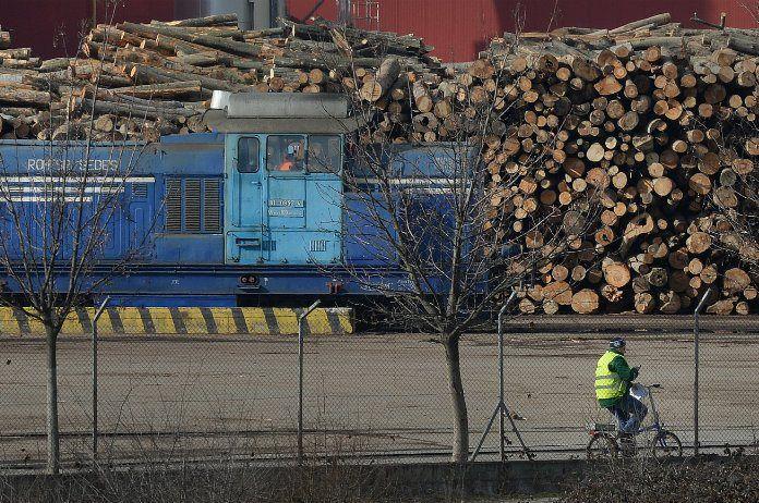 Pour Greenpeace, la Belgique devrait assumer son rôle de filtre et augmenter tant la qualité que la quantité des contrôles de l'importation de bois illégal.