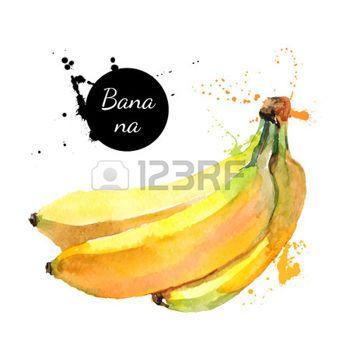 aquarelle: Main peinture à l'aquarelle tiré sur fond blanc. Vector illustration de fruits banane