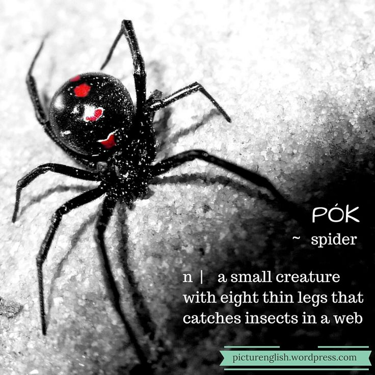 Spider / Pók