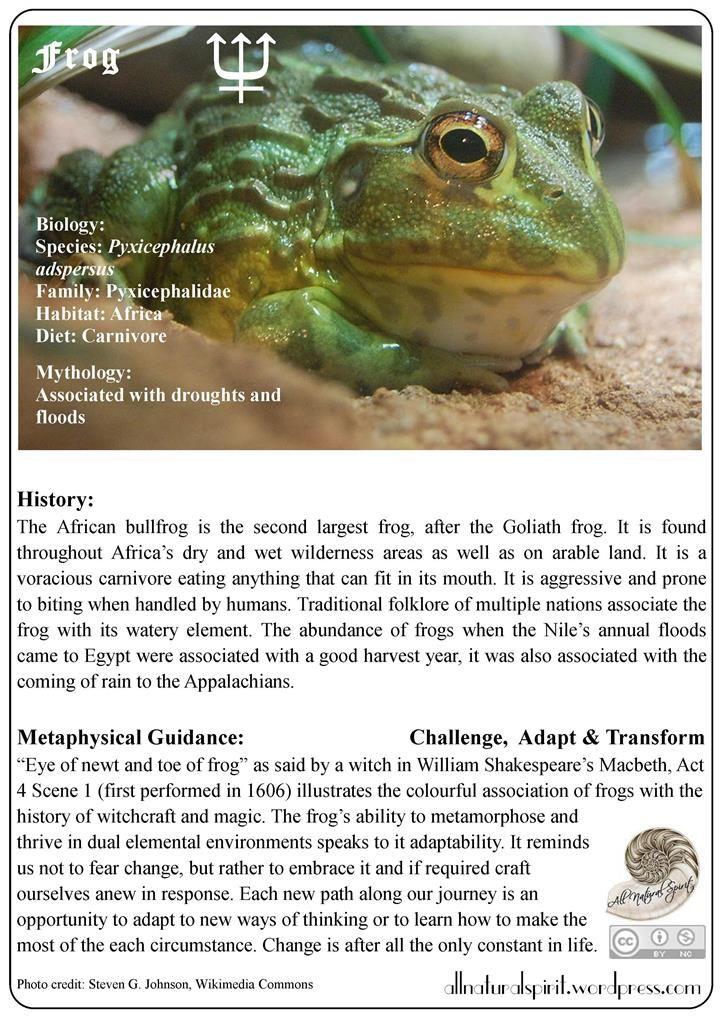 Spirit Animal Lore 3#: Frog – Free Oracle Card frog, animal, amphibian, change, transform, adapt, neptune, water, oracle, card, magic, guide, high, metaphysics, resolution, spirit, totem